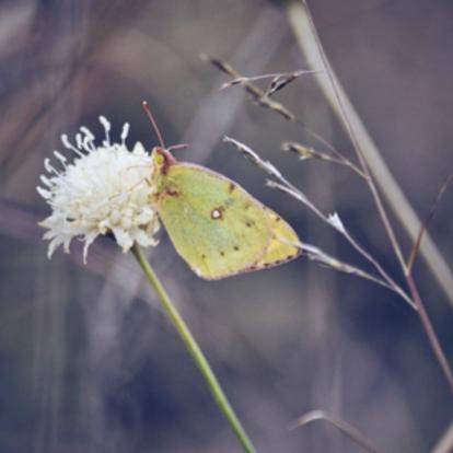 Ирина Козинченко